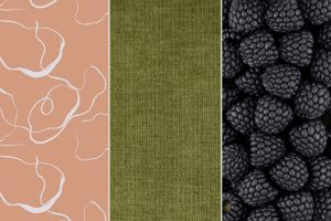 terra cotta background with white scribbles olive green fabric and close up of blackberries